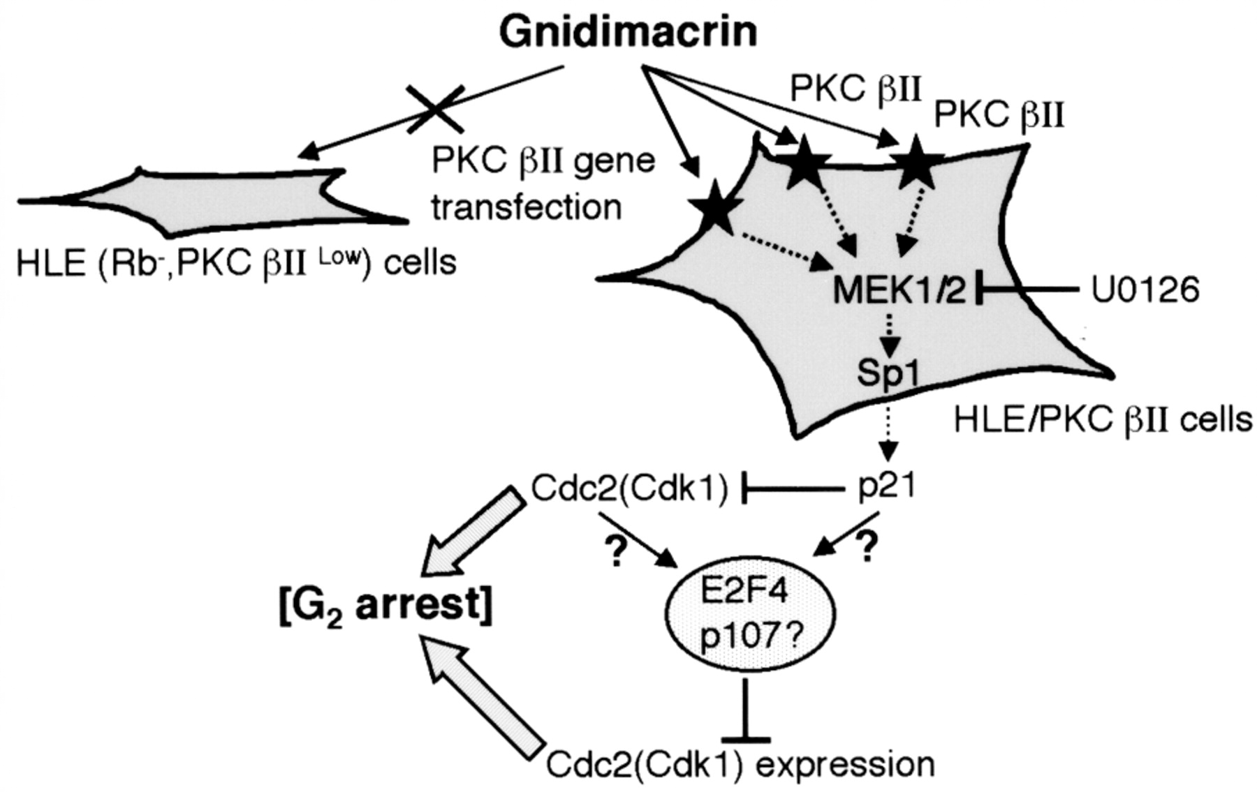 G2 Phase Arrest Through P21 Waf1 Cip1 Induction And Cdc2 Repression By Gnidimacrin In Human Hepatoma Hle Cells The common industrial protocol (cip) is an industrial protocol for industrial automation applications. anticancer research international institute of anticancer research