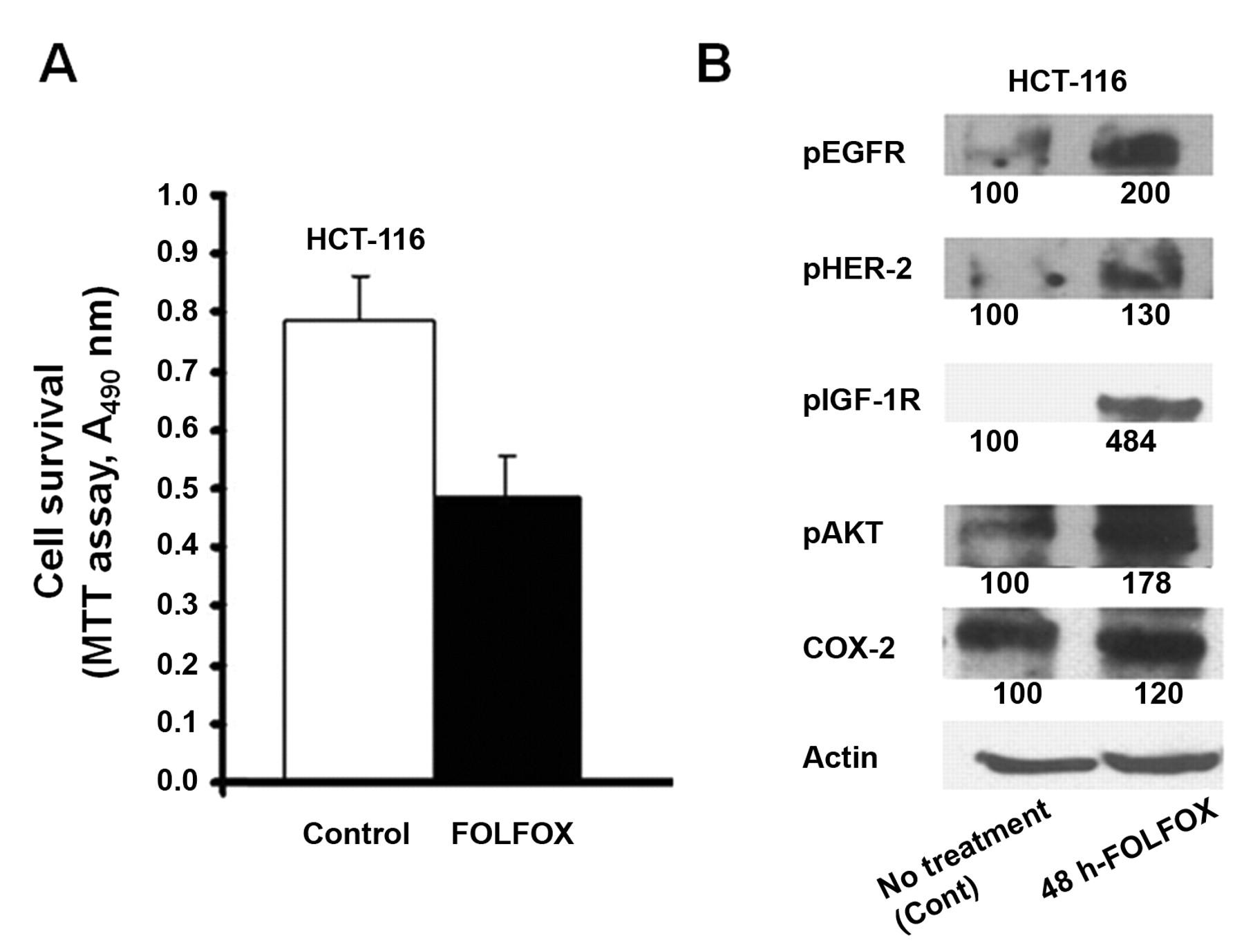 Curcumin Targets Folfox Surviving Colon Cancer Cells Via Inhibition Of Egfrs And Igf 1r