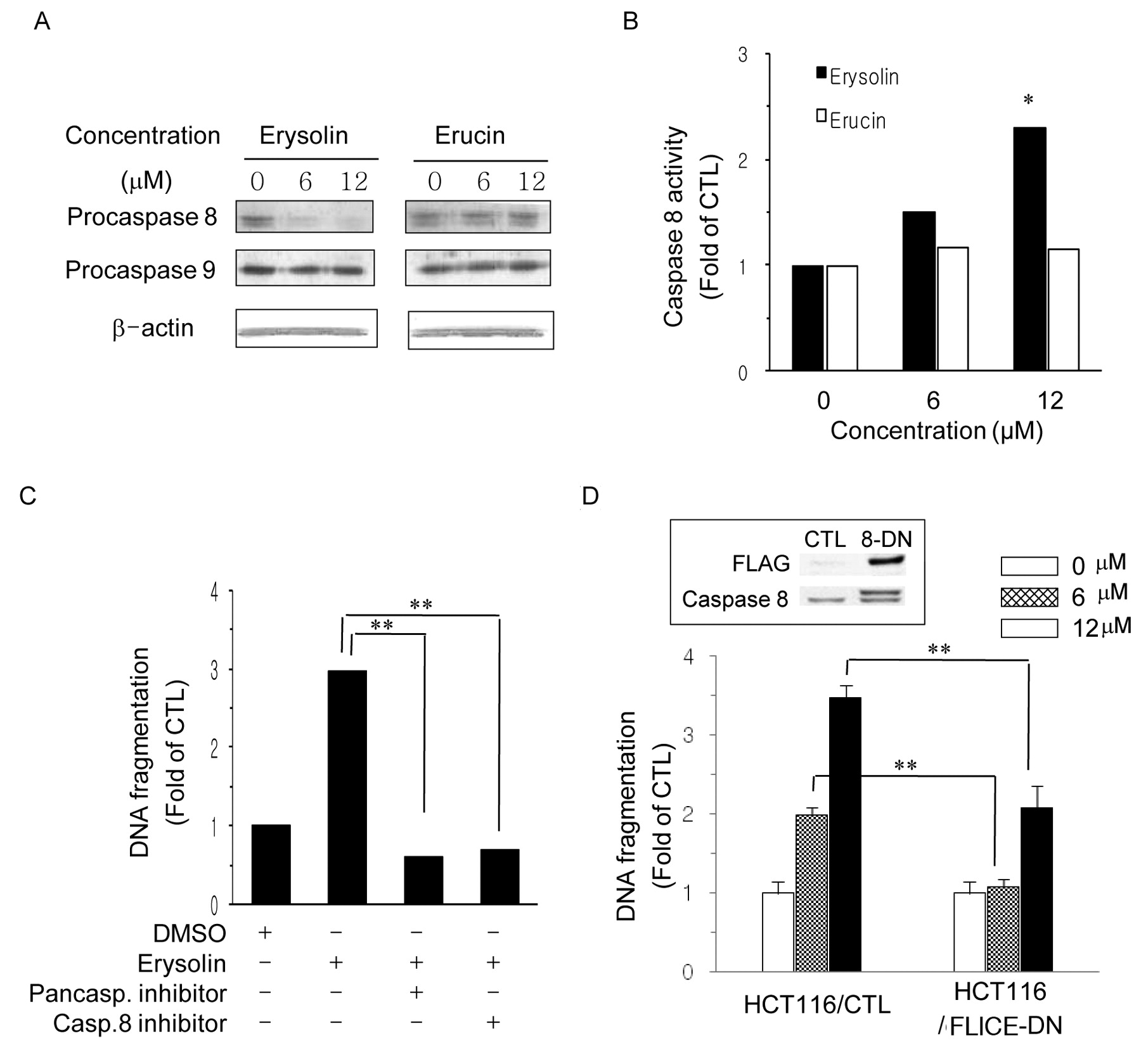 Comparison Of The Apoptosis Inducing Capability Of Sulforaphane Analogues In Human Colon Cancer Cells