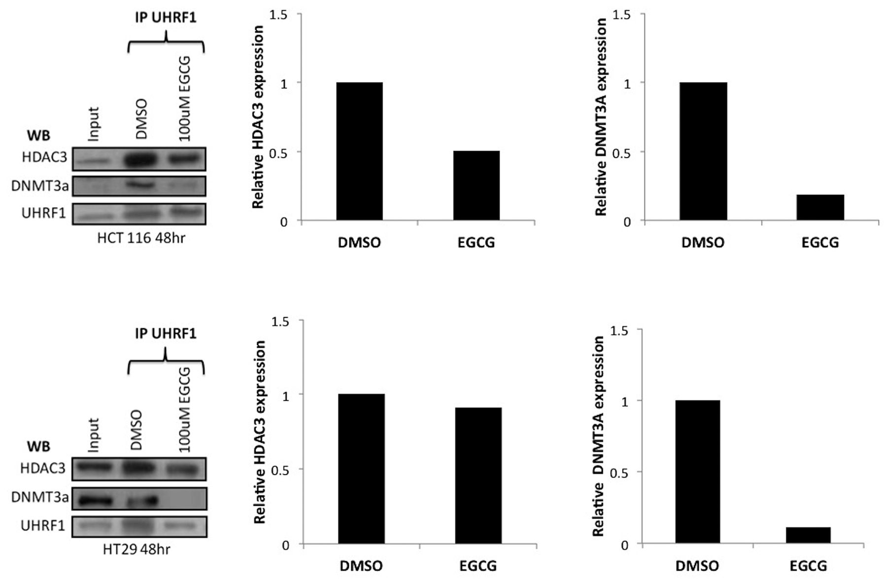 Green Tea Polyphenol Epigallocatechin 3 Gallate Contributes To The Degradation Of Dnmt3a And Hdac3 In Hct 116 Human Colon Cancer Cells