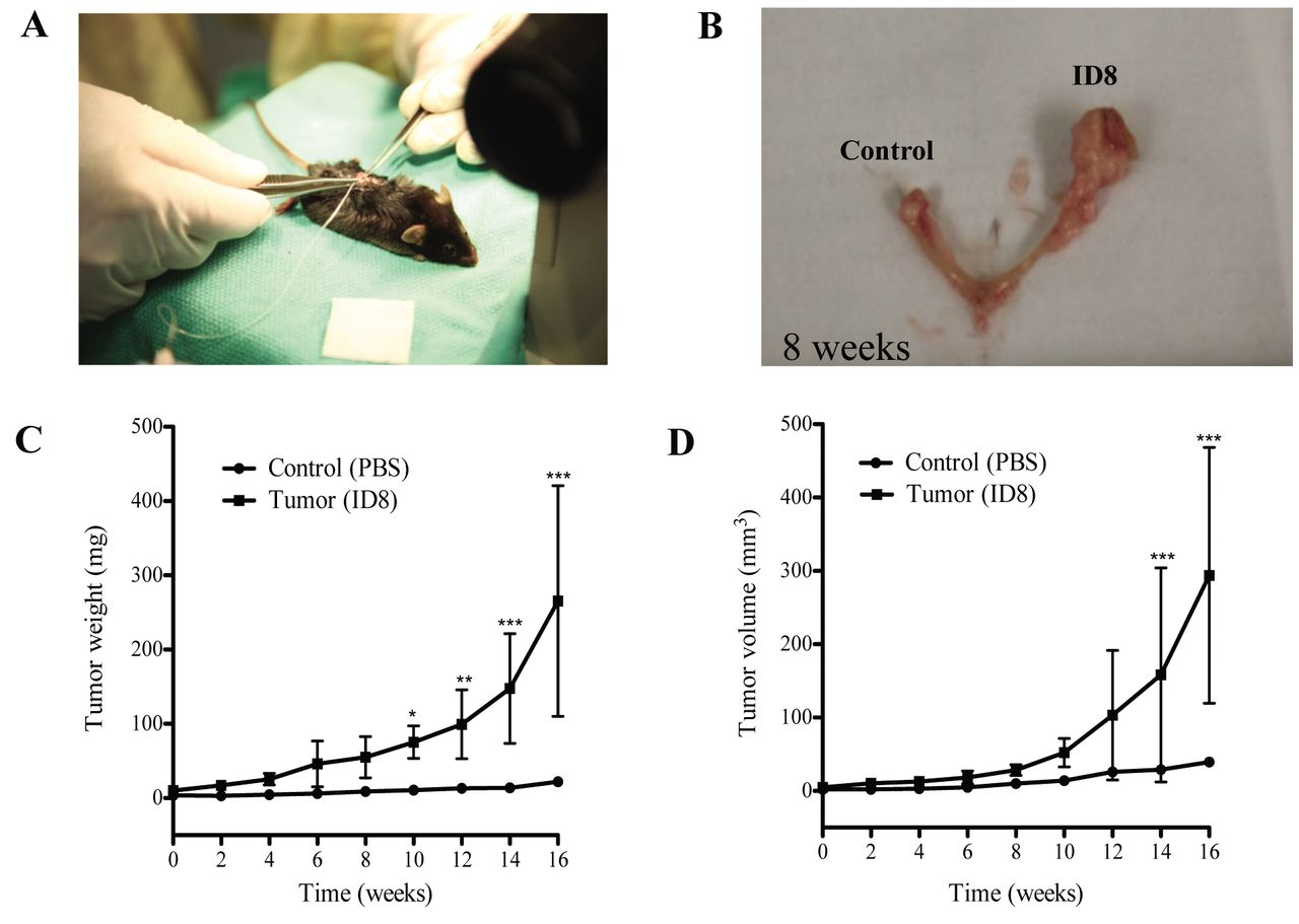 Characterization And Evaluation Of Pre Clinical Suitability Of A Syngeneic Orthotopic Mouse Ovarian Cancer Model