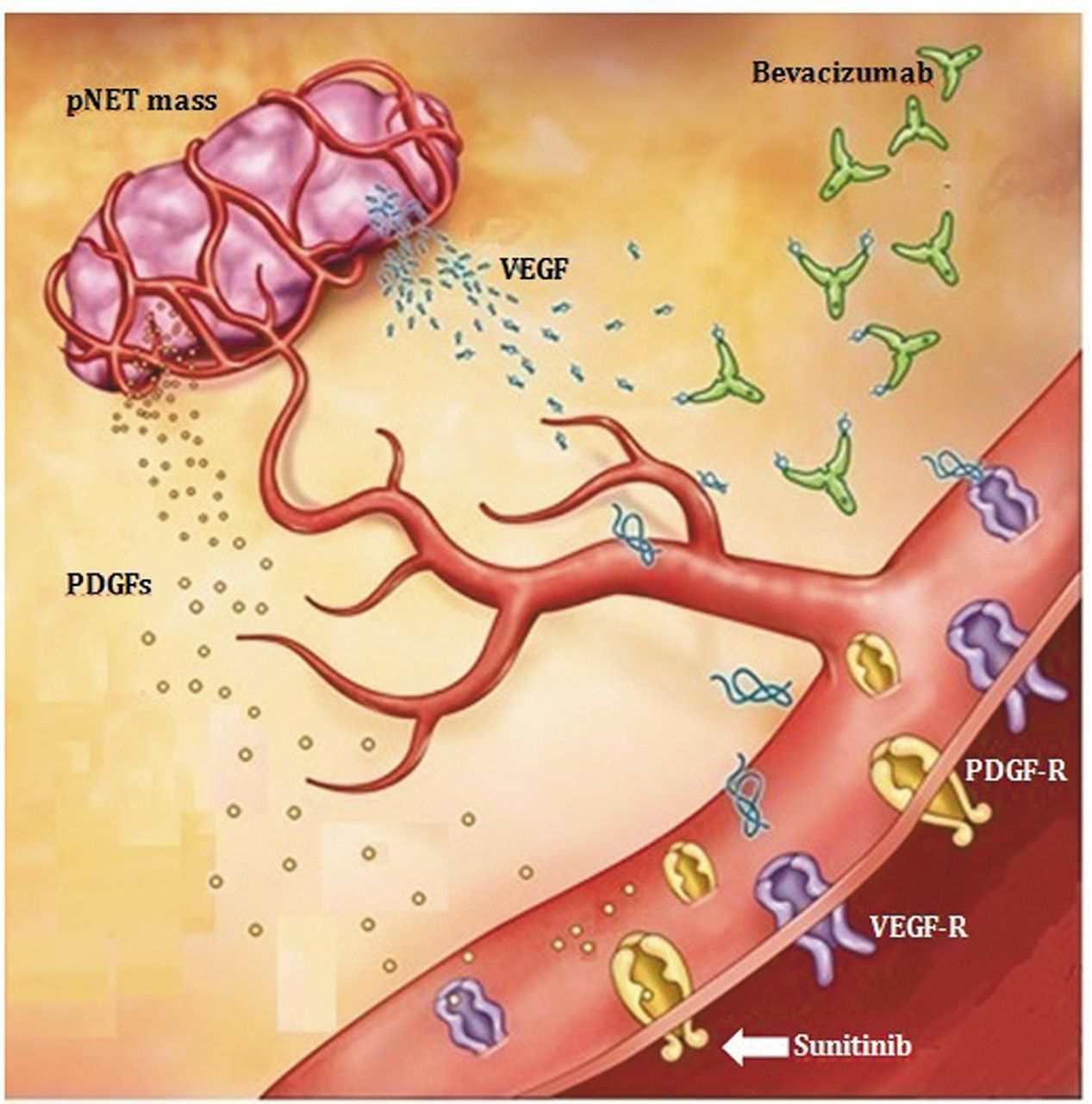 Frontiers | Combining Radiotherapy With Anti-angiogenic