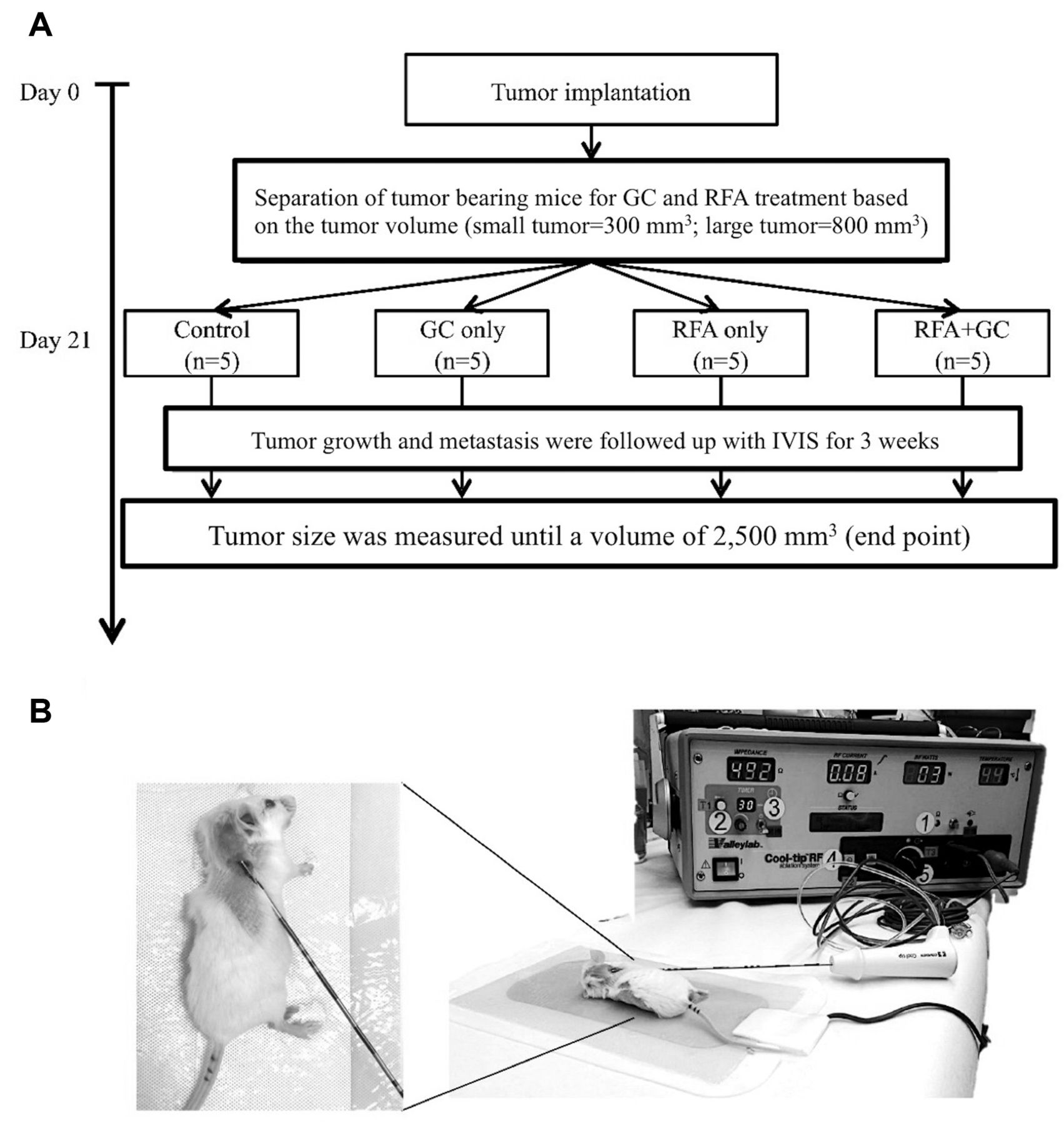 combination of radiofrequency ablation and glycated chitosan as treatment  on a syngeneic breast tumor model