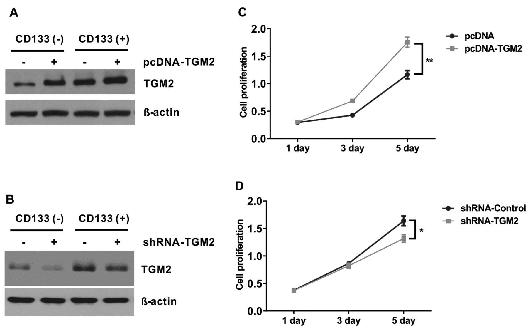 Transglutaminase 2 Regulates Self Renewal And Stem Cell Marker Of Human Colorectal Cancer Stem Cells